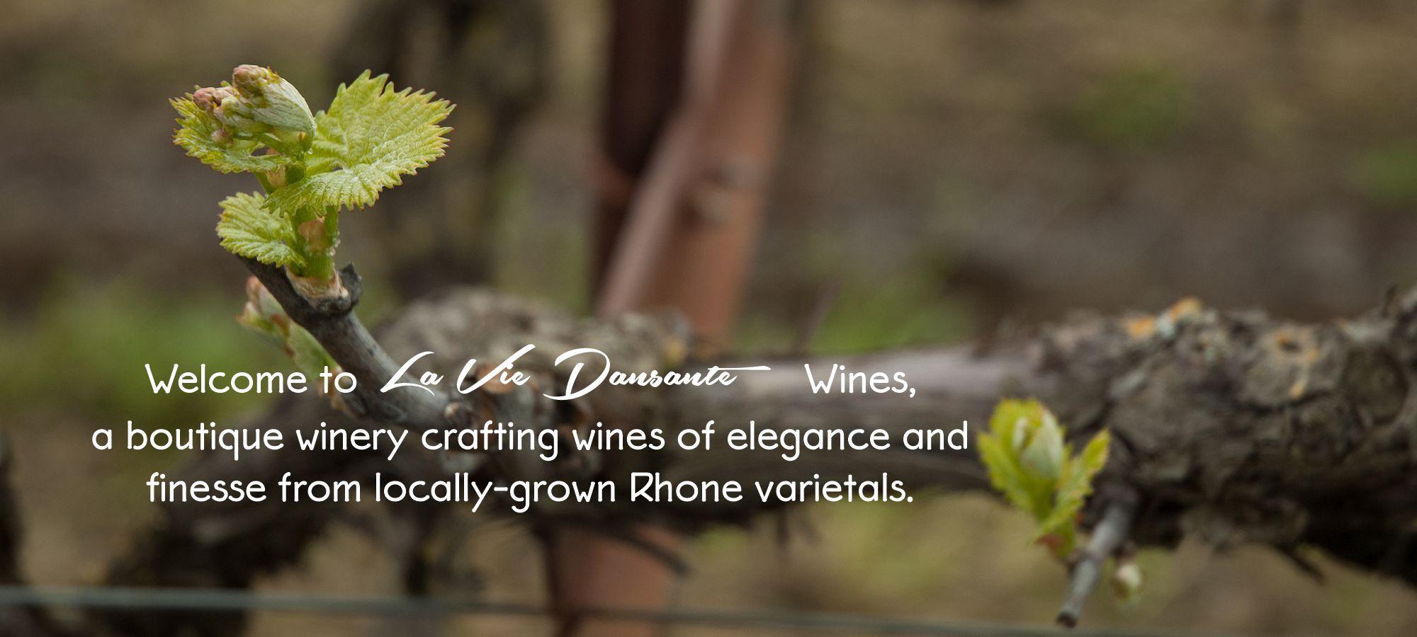 Welcome to La Vie Dansante Wines